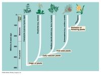139442_Plantae.jpg