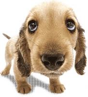 pupdog.jpg