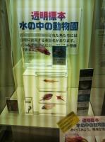 006DSC_0602.JPG